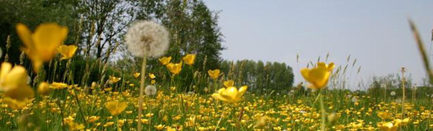 bloemenrand.jpg